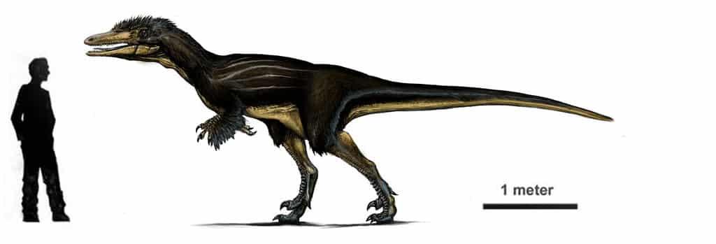 austroraptor_again__by_iririv