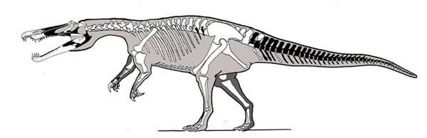 Descripción sobre Baryonyx
