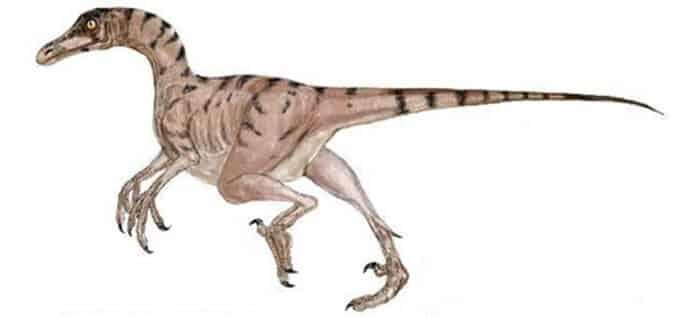 Dibujo de un Troodon