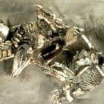 fósiles encontrados de este dinosaurio llamado velociraptor