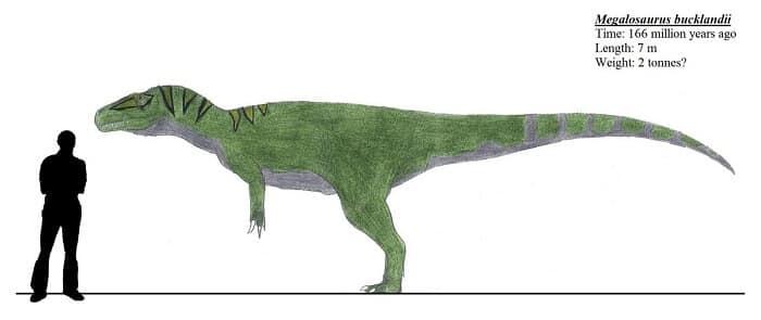 Caracteristicas Megalosaurus