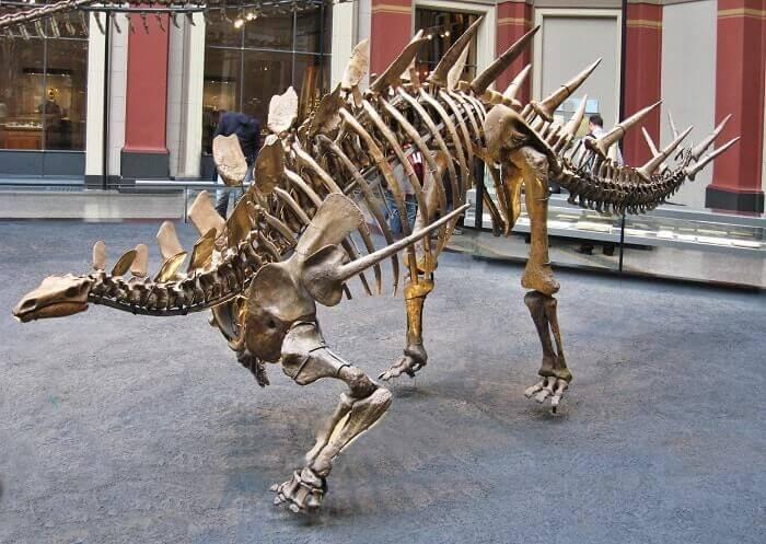 Reconstrucción de un Kentrosaurus