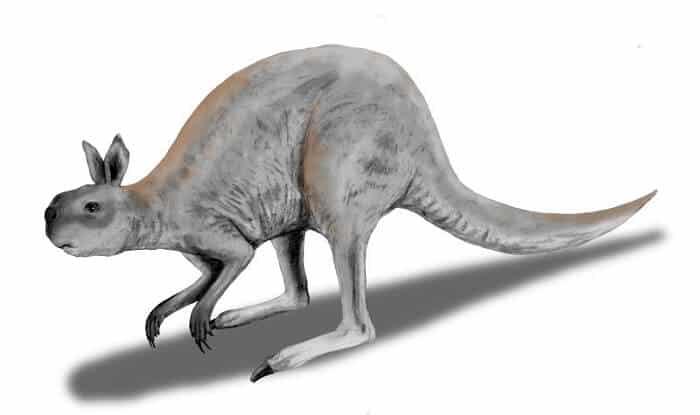 Dibujo de un Procoptodon