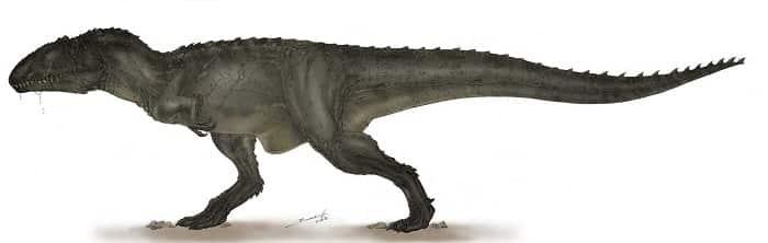 Características del Carcharodontosaurus