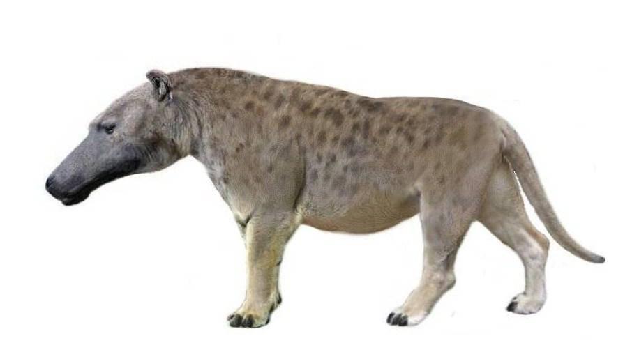 Información sobre el Andrewsarchus
