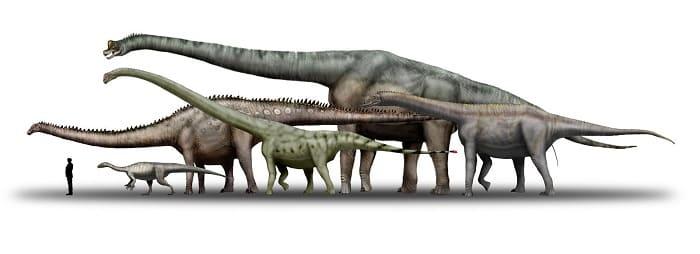 tamanos-sauropodos