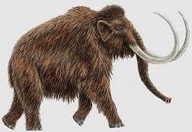 Mamut dinosaurio conocido y sus grandes cuernos
