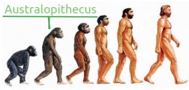 Australopithecus - evolucion del hombre