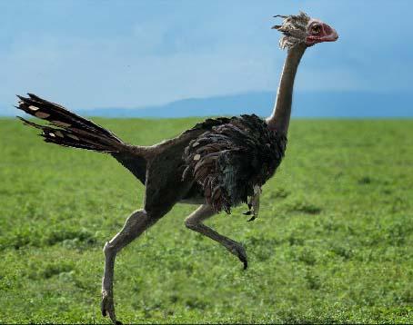 avimimus – dinosaurio herbívoro