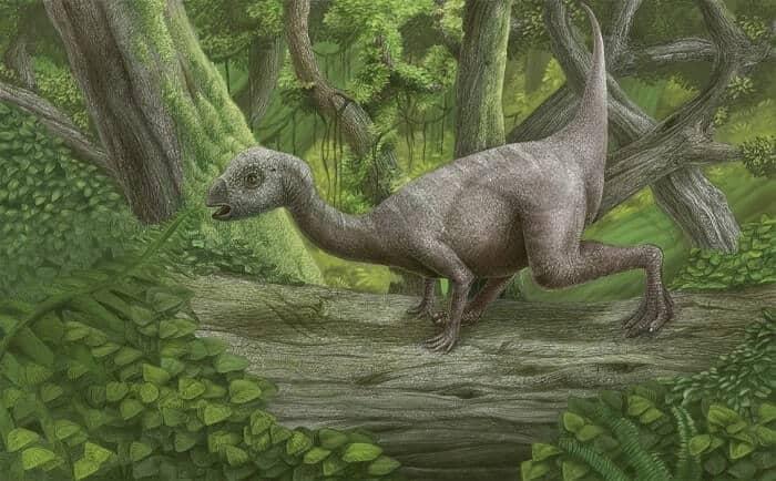 Descubrimiento del Hypsilophodon