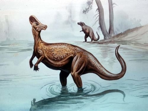 el corythosaurus  el dinosaurio que ten u00eda un casco espartano