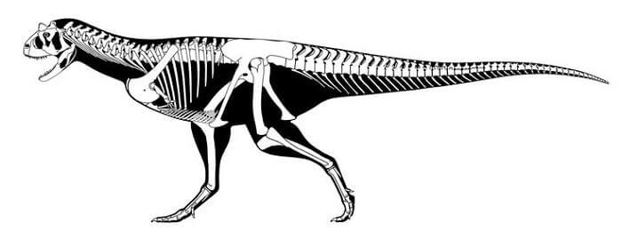 Descripción del Carnotaurus