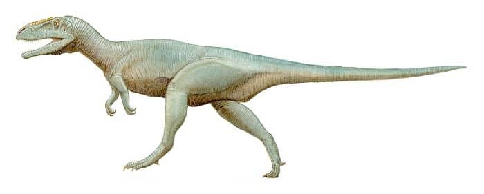 Dibujo de un Megalosaurus