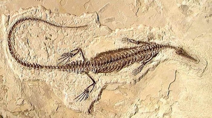 Restos de Mesosaurus