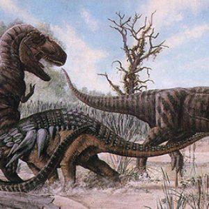 Daspletosaurus vs t-rex