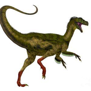 Ornitholestes- dinosaurio carnívoro