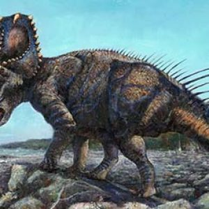 centrosaurus – dinosaurio herbivoro