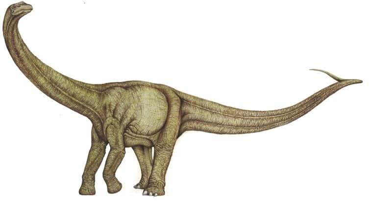 dinosaurio Agrosaurus