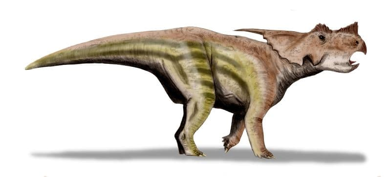 el dinosaurio Achelousaurus